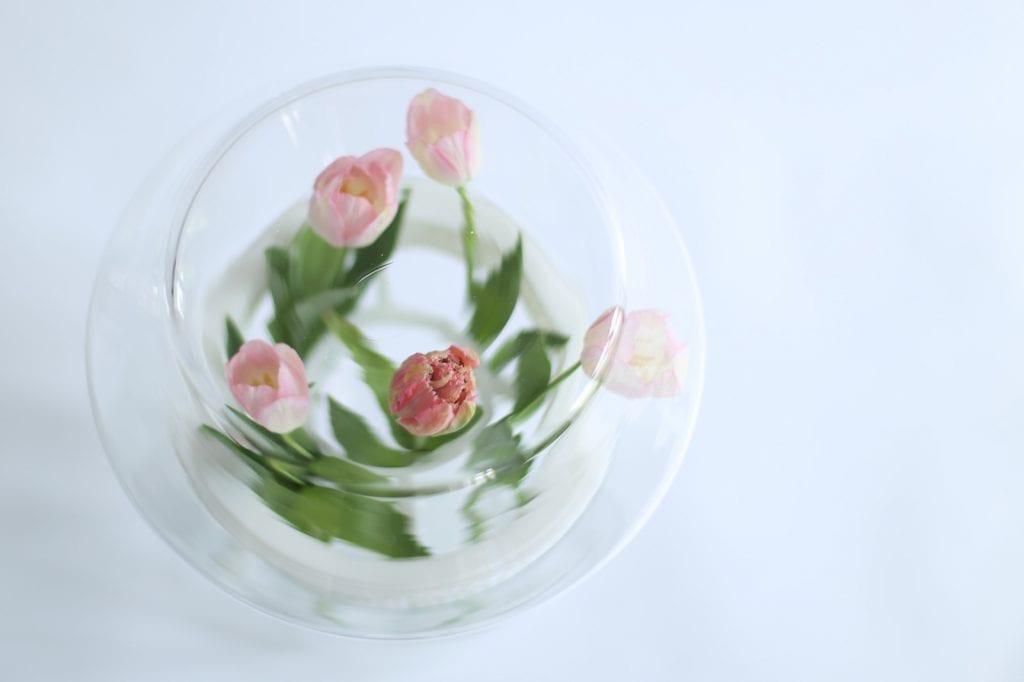 Dopełnienie - dyplom magisterski ASP Wrocław, tulipany wewnątrz wazonu ze szkła.