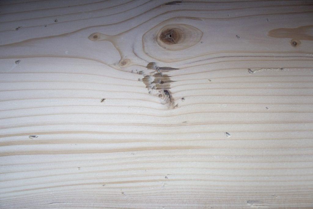 Dzikie Twory - uszkodzenia drewna