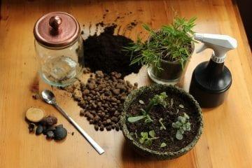 Dzikie Twory - materiały potrzebne do stworzenia lasu w słoiku
