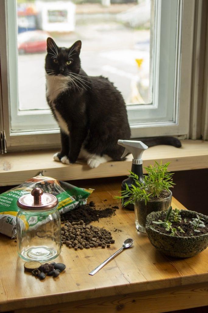 Dzikie Twory - materiały potrzebne do stworzenia lasu w słoiku, kot jak zawsze gotowy do pracy