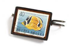 Dzikie Twory - broszka ze znaczkiem pocztowym z 1967 roku, ryba chaetodon fasciatus
